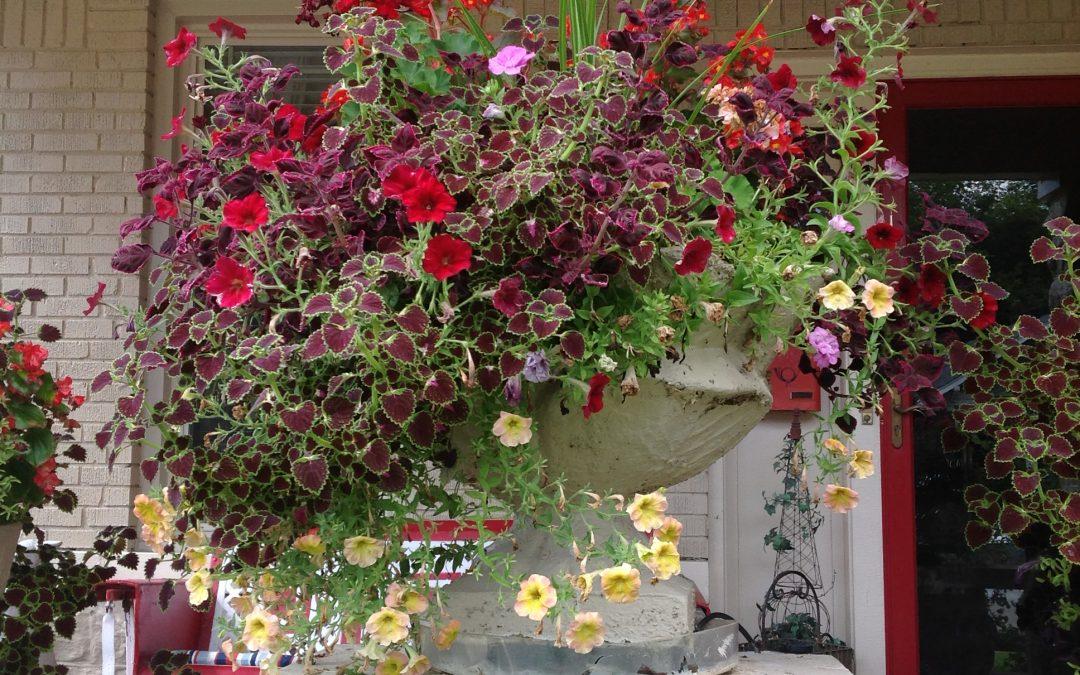 Flashback November2018–Demands of automobiles can't coop up garden's potential.