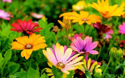 Bob's Monthly Garden Checklist-June
