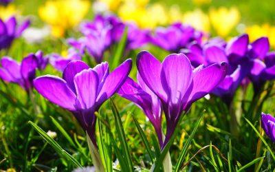 Bob's Monthly Garden Checklist-April