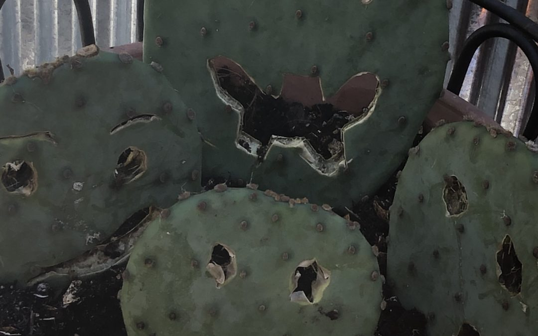 Prickly Pear Faces