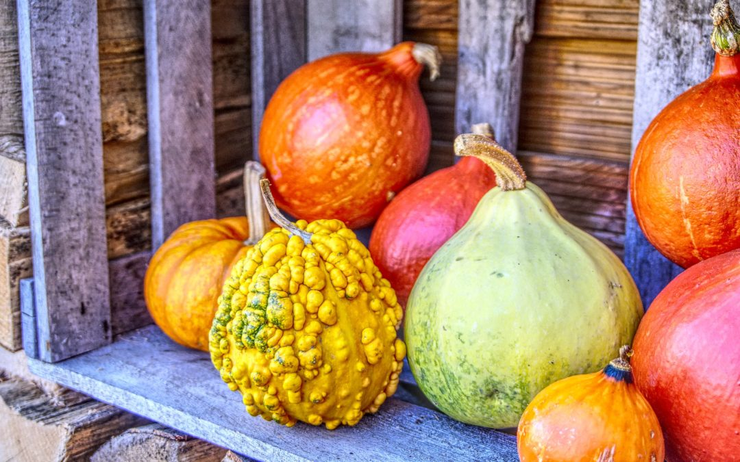 Bob's Monthly Garden Checklist-October