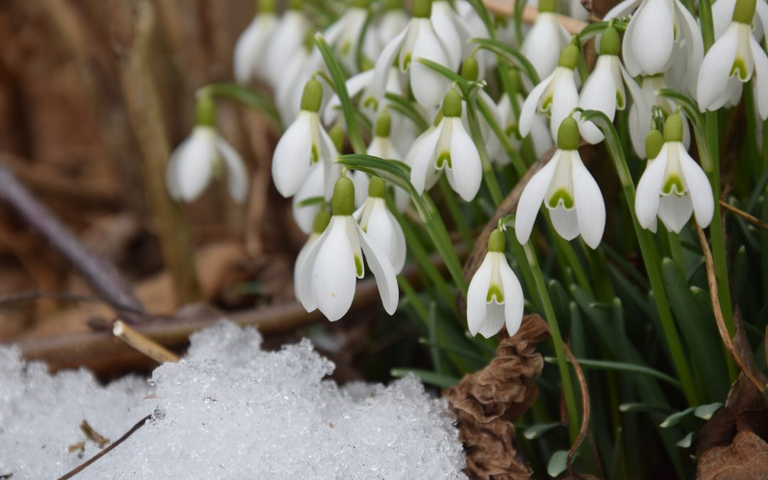 Bob's Monthly Garden Checklist-February
